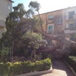 """Agrigento, a rischio stabilità alberi: """"Question Time"""" del consigliere La Scala (M5S)"""