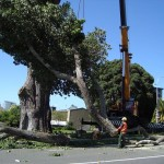 Agrigento, riprendono i lavori di abbattimento degli alberi pericolosi