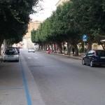 Viale della Vittoria: al via la potatura degli alberi