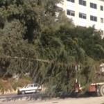 Giunto da Cammarata l'albero di Natale di Agrigento