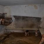 Licata, scoperto allevamento abusivo di animali: denunce e sanzioni