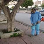 Agrigento, nuovo ciclo di interventi di decespugliamento nel centro città