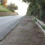 """Agrigento, rimozione albero pericolante: chiusa la statale 118 """"Passeggiata Archeologica"""""""