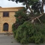 Agrigento, albero cade in via Passeggiata Archeologica – FOTO