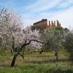 Domeniche al parco, il 7 aprile, due appuntamenti: Mito e musica al Museo Griffo, Animali di quartiere al quartiere ellenistico Romano
