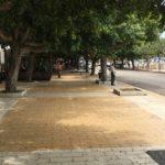 Agrigento, si potano gli alberi al Viale della Vittoria