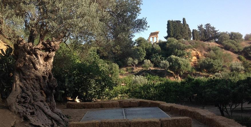 Sere fai d 39 estate notte bianca al giardino della kolymbethra - Il giardino d estate ...