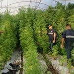 "Scoperta maxi piantagione di ""Marijuana"" di 3000 mq: arrestato palmese"