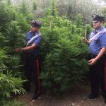 Favara, scoperta piantagione di Marijuana e armi: in manette padre e due figli