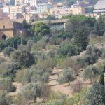 Valle dei Templi: dal 10 ottobre inizio degli scavi per svelare l'antico teatro