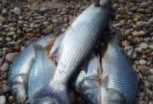 """Licata, pesci morti sulla spiaggia: nuovo caso alla """"Playa"""""""