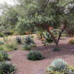 Agrigento, al Giardino Botanico di scena pittura estemporanea, musica e visite guidate