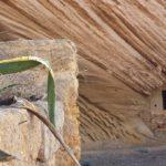 """Giornate FAI di Primavera: il Giardino Botanico palcoscenico di una """"Iniziativa speciale"""""""