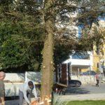 Agrigento, ecco l'albero di Natale: un abete da 16 metri