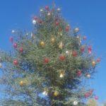 Agrigento, addobbato l'albero di Natale di piazza Stazione: tra i più alti d'Italia