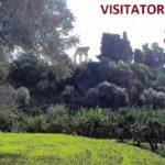 Boom di visitatori al Giardino della Kolymbethra: nell'ultimo anno 83mila presenze
