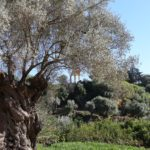 """Agrigento, """"Scampagna della Liberazione"""" al Giardino della Kolymbethra"""