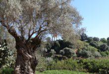 """Agrigento """"vive"""" le Sere d'Estate Fai al Giardino della Kolymbethra. Lo Pilato: """"dobbiamo essere orgogliosi"""" – VIDEO"""
