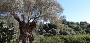 """Il Giardino della Kolymbethra """"incanta"""" per le """"Giornate FAI di Primavera"""" – FOTO E VIDEO"""