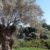 giardino-della-kolymbethra