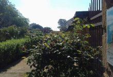 Giornate FAI: al Giardino botanico è percorribile il Viale delle Maioliche