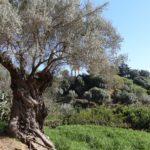 Agrigento, accordo Comune-Fai per Pinacoteca e Giardino della Kolymbethra