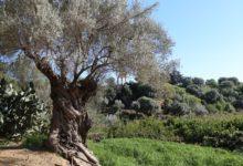 Scampagnate di Primavera: 25 aprile e primo maggio al Giardino della Kolymbethra