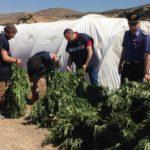 Piantagione di marijuana nel licatese: domiciliari per il 23enne arrestato