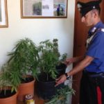 """Licata, coltivava """"Cannabis"""" nella propria abitazione: arrestato operaio"""
