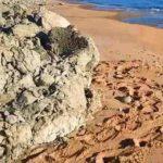 Punta Bianca, tartaruga tenta di deporre le sue uova a Drasy – VIDEO