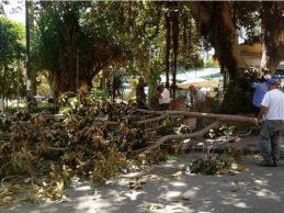 Agrigento, messa in sicurezza del Ficus di Porta di Ponte: probabile interdizione momentanea della via Atenea