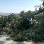 Agrigento, albero viene giù e travolge palo dell'illuminazione: nessun ferito