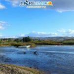 Acque di vegetazione nel mare di Cannatello: l'allarme di Mareamico