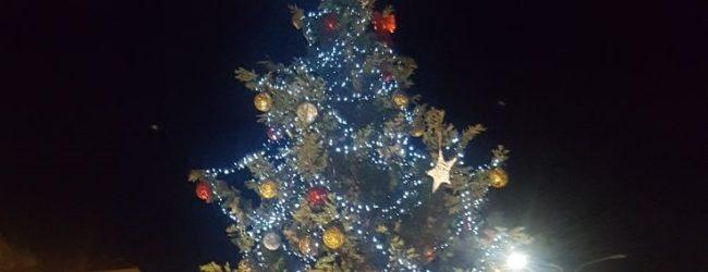 """Agrigento ha il suo albero di Natale: addobbato il fusto """"regalato"""" alla città"""