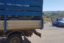 Agrigento, fermato carico di agnelli e capretti: sanzioni per 8 mila euro