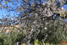 Meteo Agrigento: bel tempo e temperature gradevoli daranno un assaggio di primavera anticipata