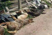 """Sciacca, manifestazione animalista: non aderisce l'associazione """"Amici Animali Onlus"""""""