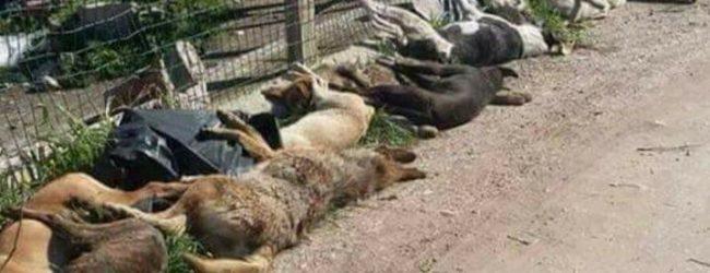 """Caso cani avvelenati a Sciacca, Forza Italia Giovani: """"Prevenzione e responsabilità"""""""