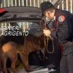 Ribera, cane antidroga trova tre panetti di Hashish in giardino: arrestato 37enne