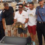 """Agrigento, salvata una tartaruga """"caretta caretta"""" al largo di San Leone"""