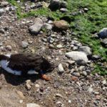 """Strage di uccelli al fiume Akragas, Legambiente: """"si appurino le cause"""""""