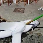 Squalo avvistato a Sciacca: ecco la crudeltà umana – VIDEO