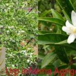 Agrigento, fioritura eccezionale al Giardino botanico del Libero Consorzio