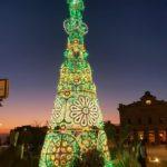 """Agrigento, si """"illumina"""" il nuovo albero di Natale: donato da Franco Miccichè"""