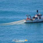 L'Assessorato Regionale pone il divieto di pesca del novellame