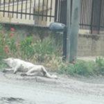 Aragona, carcassa di cane in via Odierna: la protesta dei residenti