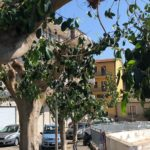 Aragona, iniziata la potatura degli alberi in piazza Aldo Moro