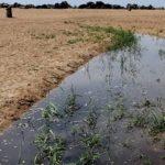 """San Leone, allarme di Mareamico: """"quando piove, contenuto inquinante finisce nella spiaggia delle Dune"""""""