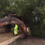 Agrigento, auto ribaltata a causa di un tronco d'albero: citato Comune in giudizio
