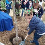 """L'Istituto """"Quasimodo"""" di Agrigento celebra la festa dell'albero"""